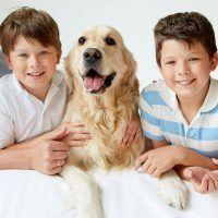 prevision-exequial-de-mascotas-producto