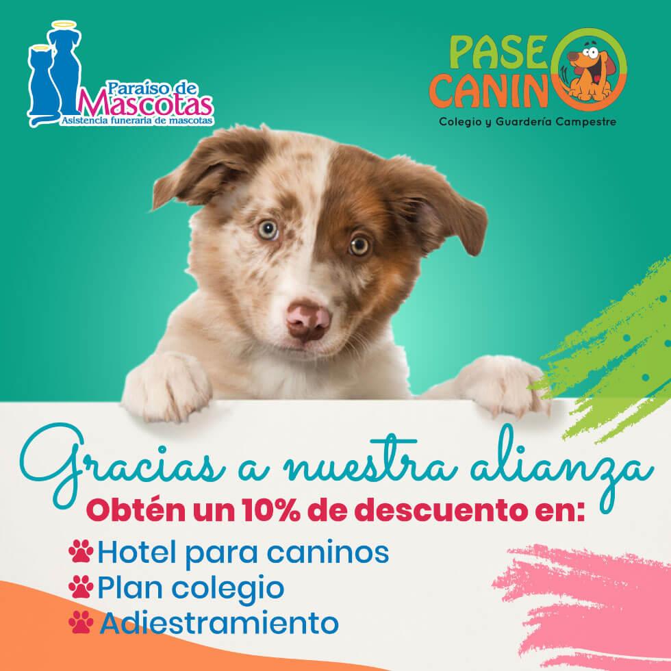 Alianza Paraiso de mascotas y Paseo canino