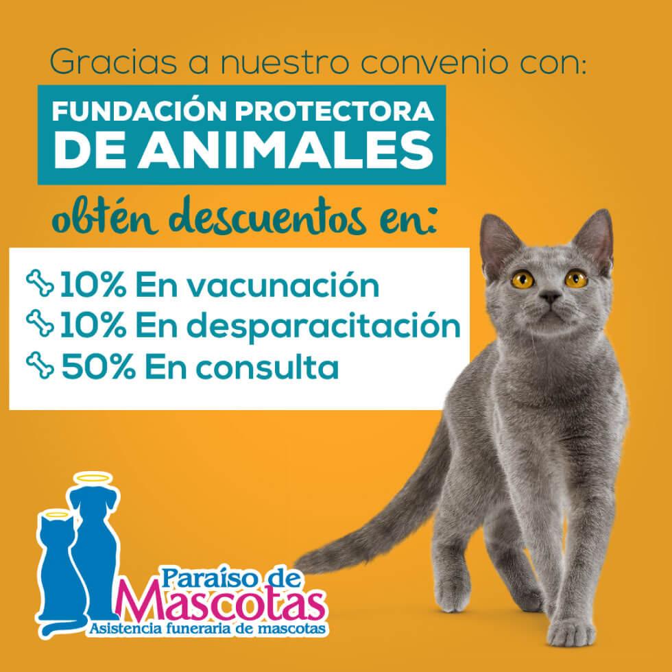 Alianza Paraiso de mascotas y Fundacion de Animales