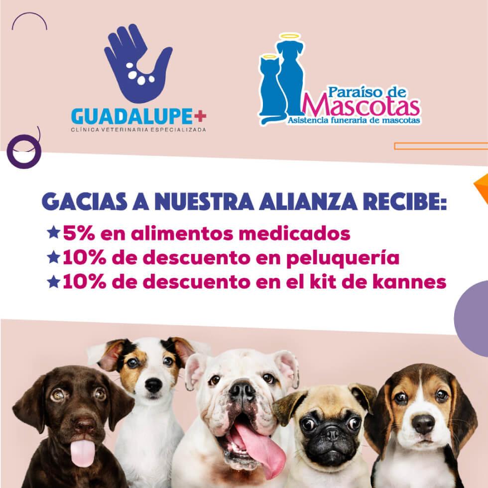 Alianza Paraiso de mascotas y Guadalupe+