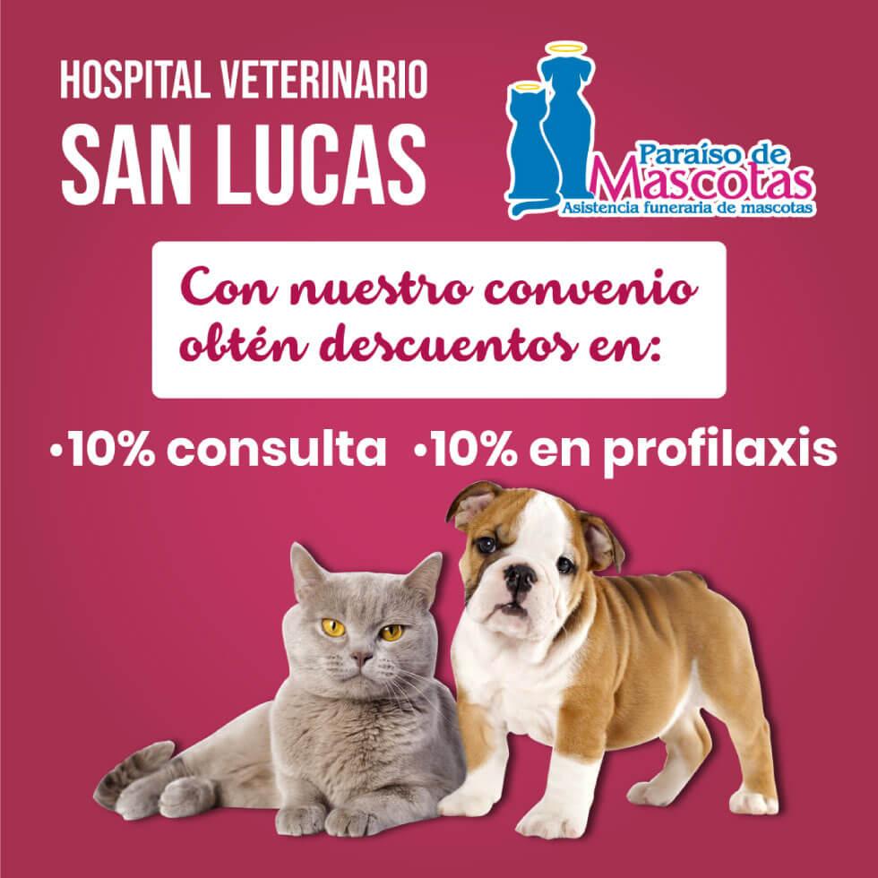 Alianza Paraiso de mascotas y Hospital San Lucas