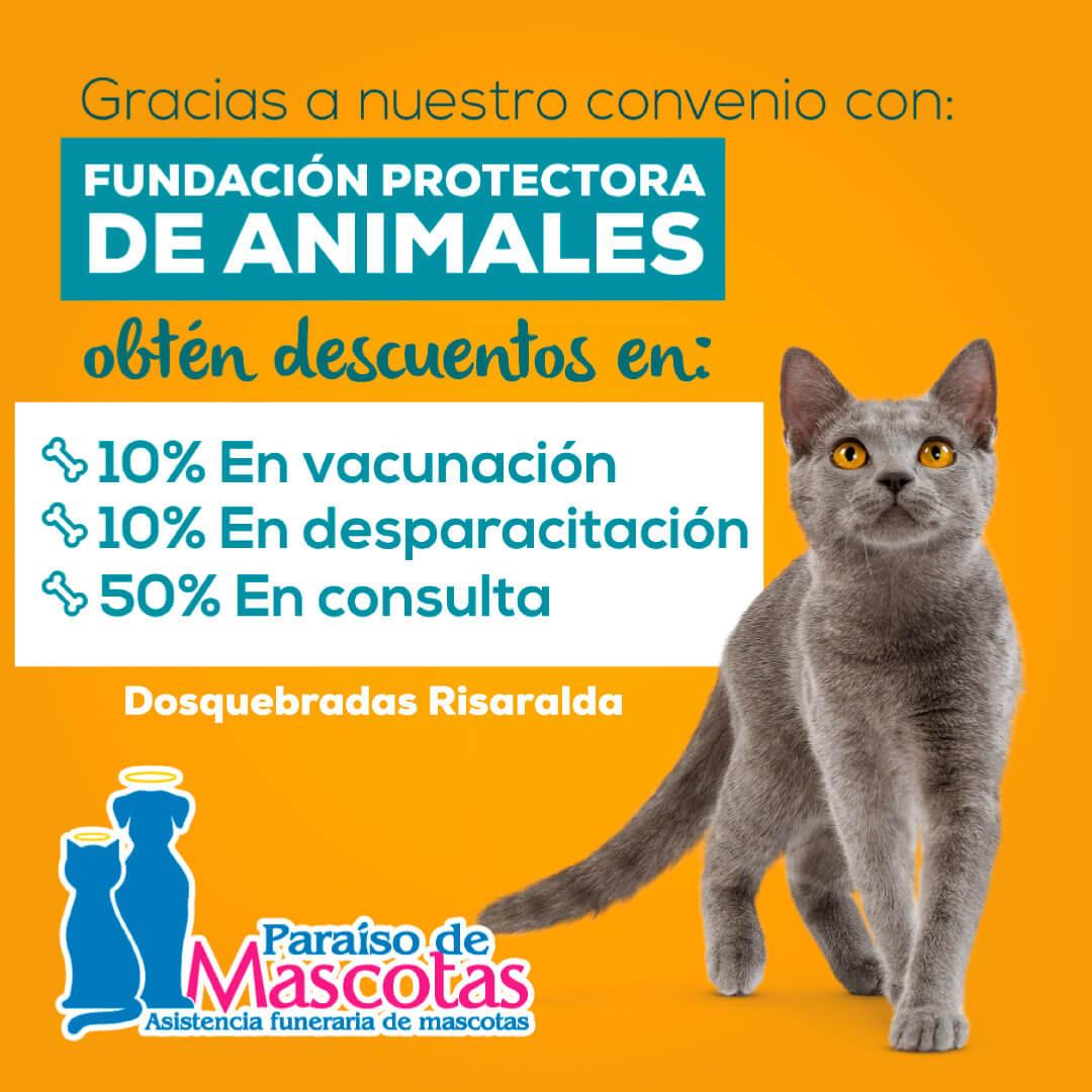 Alianza-Paraiso-Fundacion-de-Animales