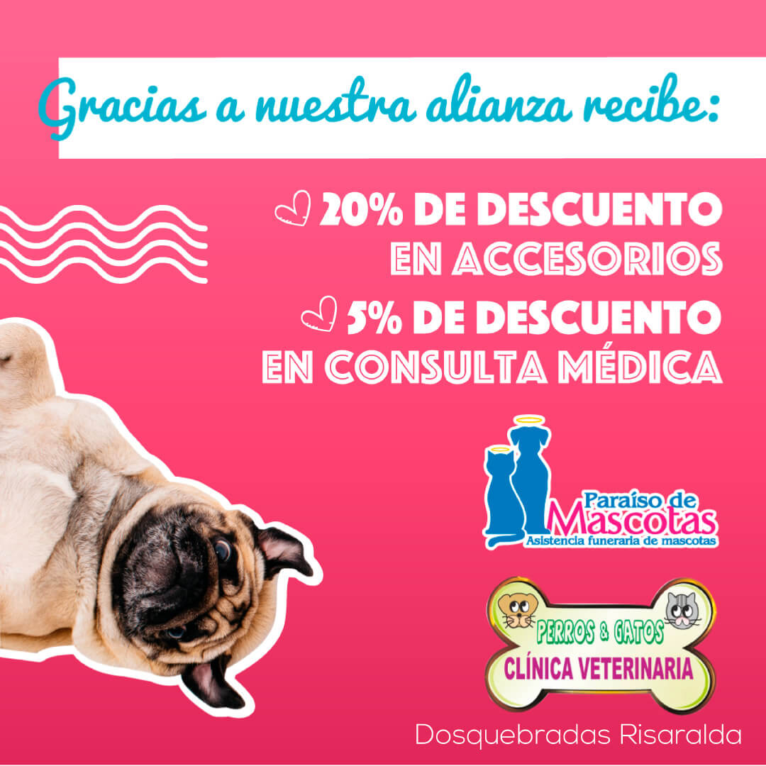 Paraiso-Perros-y-gatos-veterinaria